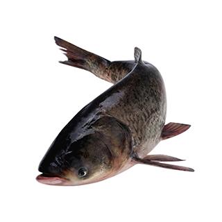 千岛湖淳牌有机鱼7.5-8斤重庆 辽宁 四川 贵州 广西 甘肃 宁夏 广东 云南 海南